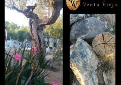 Decoración floral natural en Cortijo Venta Vieja